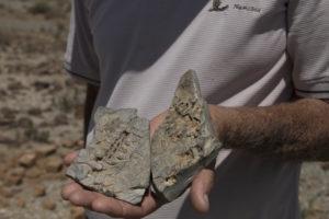 reperto fossile in una mano