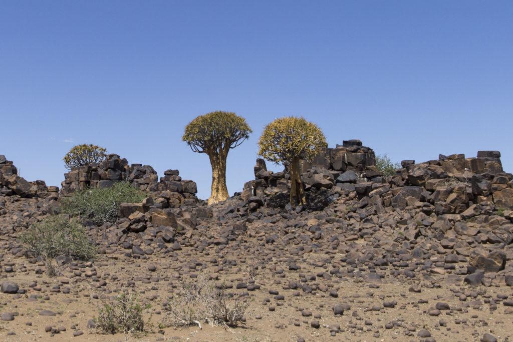 alberi faretra e rocce di diabase