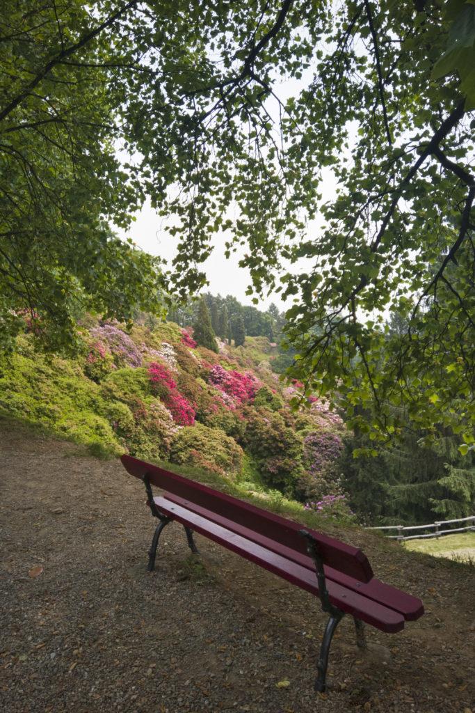 Panchina e rododendri fioriti