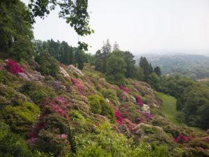 rododendri in fiore al Parco della Burcina