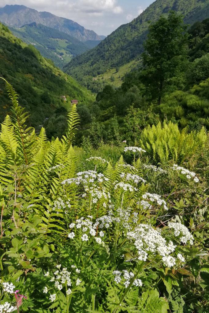 sentiero fiorito con vista sulla valle