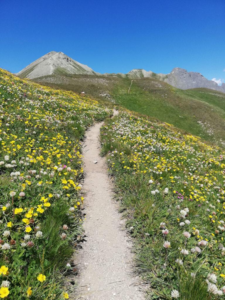 sentiero tra fiori gialli e monti