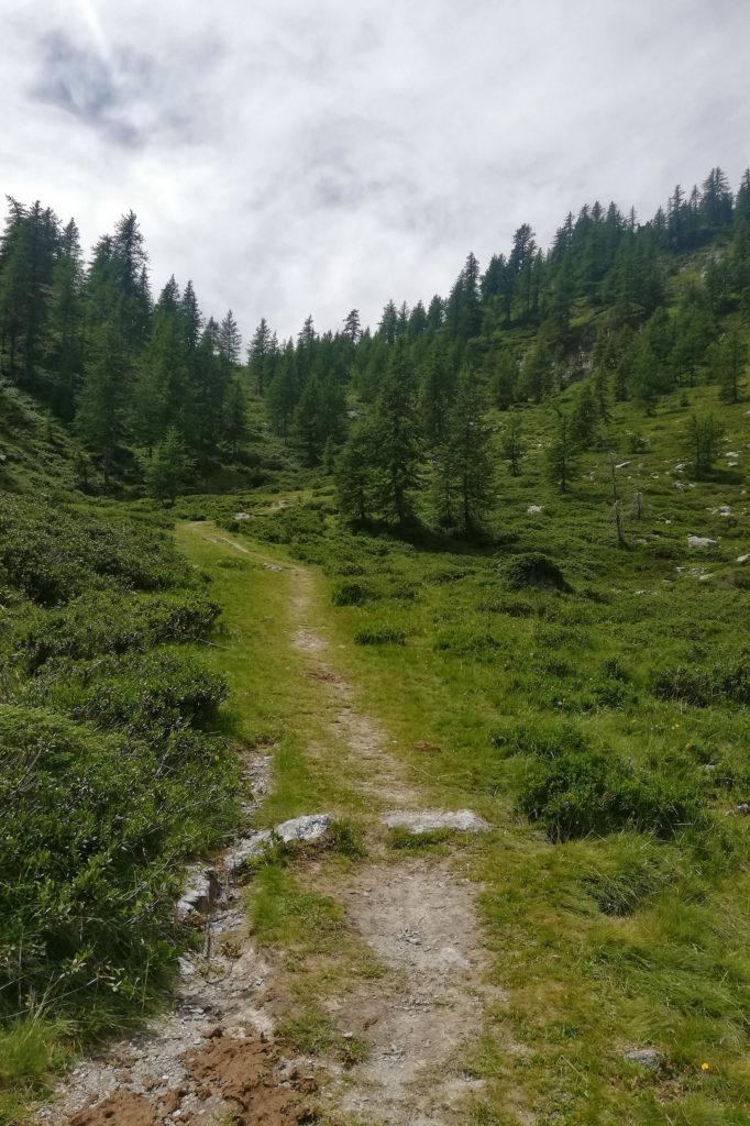 sentiero in un lariceto