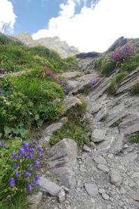 Sentiero fiori e rocce