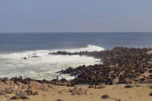 colonia di otarie a Cape Cross