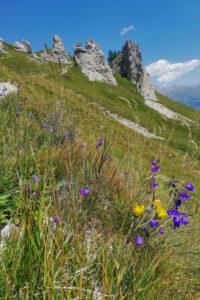 prati fioriti e formazioni rocciose di tipo dolomitico
