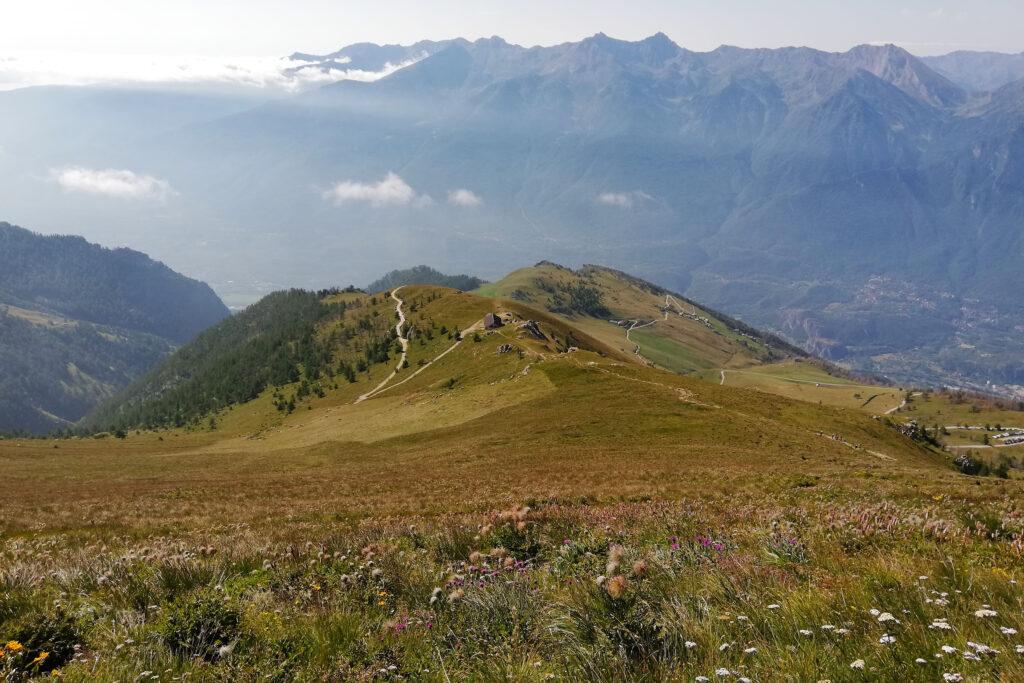 pascoli in fiore in Valle di Susa