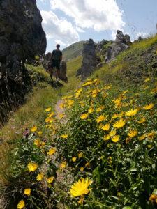 Ragazzo tra i fiori gialli e formazioni rocciose di tipo dolomitico